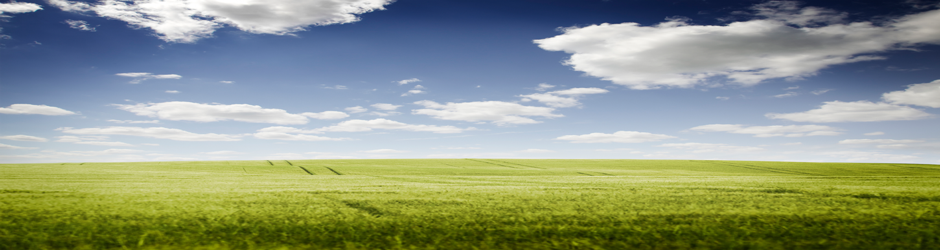 Green field with a blue sky filled with white clouds